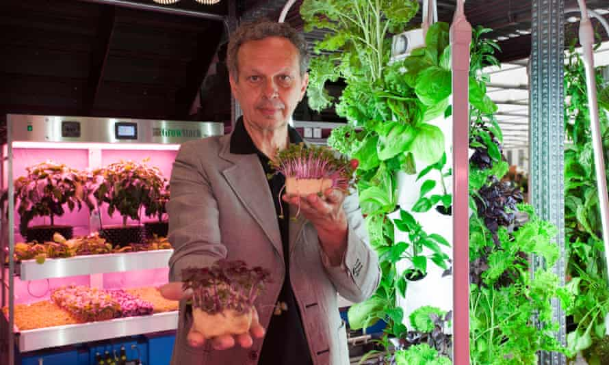 Designer Tom Dixon has created a garden-laboratory for Ikea, on show at Chelsea, for research into non-soil growing.