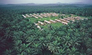 Aerial view of an African oil palm plantation with workers' housing in south-west Cameroon.
