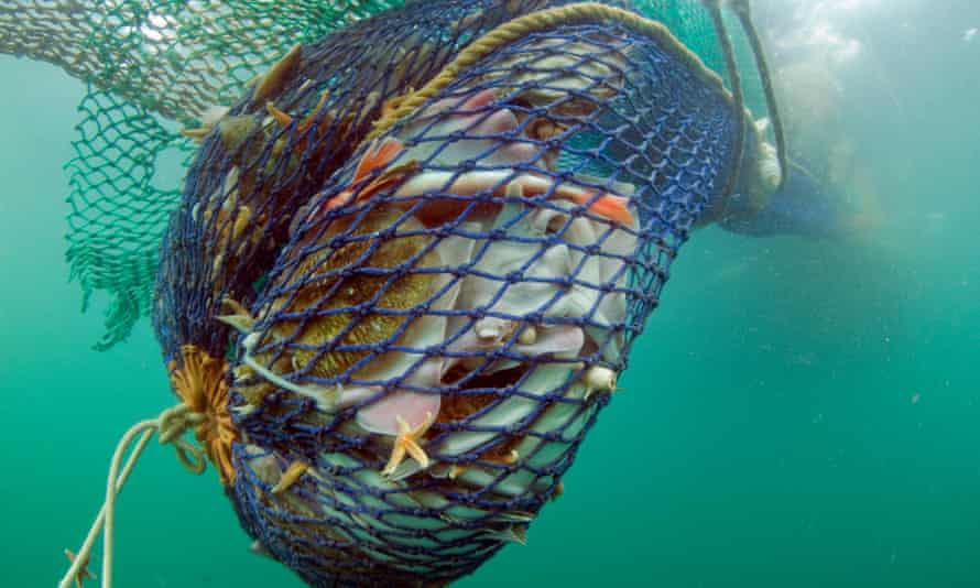 A trawl net is hauled to the surface after being dragged along the seabed; 'bottom trawling' is one of the most controversial fishing practices because the large amount of bycatch harms biodiversity.