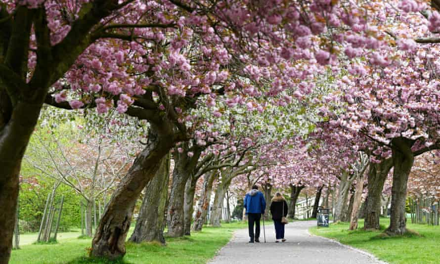 People walk along blossom-lined paths near Wavertree Botanic Gardens Liverpool.