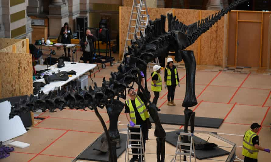A team of specialists piece Dippy back together in Glasgow.