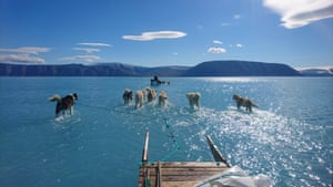 Dogs hauling a sled through meltwater on coastal sea ice in June 2019 showed its 'unusual' rapid melting as temperatures soared above normal levels in Greenland.