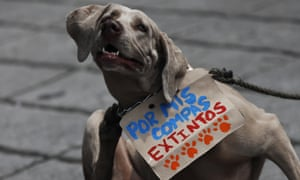 """""""For my extinct friends"""" reads this Mexico City dog's sign."""
