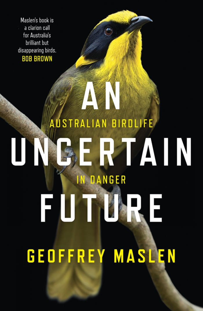When magpies attack: the swooping, dive-bombing menace – and