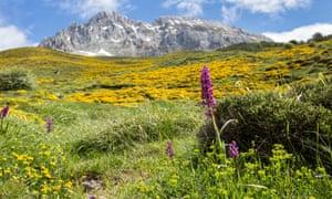 Spring Flowers in the Meadows Above the Village of Santa Marina de Valdeon, Picos de Europa Mountains