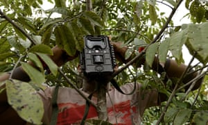 A Ka'apor Indian sets up a trap camera in an area used by illegal loggers.