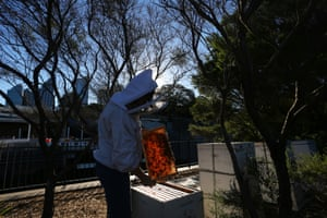 Vicky Brown inspects the hives on the Wooloomooloo rooftop. Australia has an estimated 2,000 species of native bee, along with the European honey bee, which according to the NSW Department of Primary Industries plays an important role in large-scale agricultural pollination services and provide beeswax and honey to the domestic and export market.