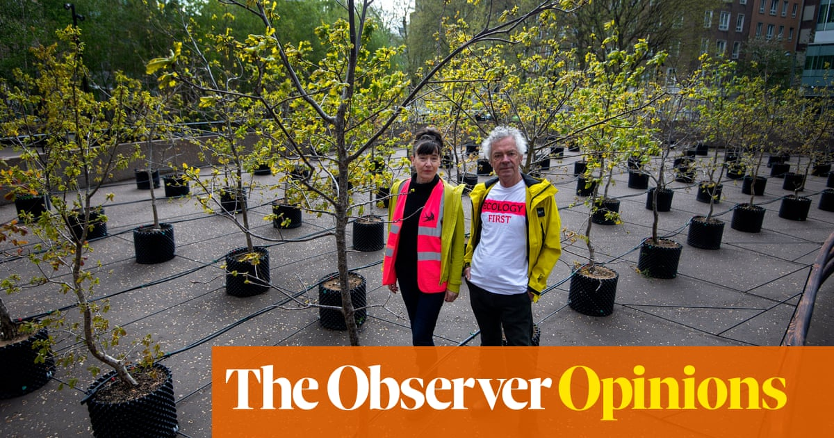 There's a time and a place for trees – don't transplant them for our amusement