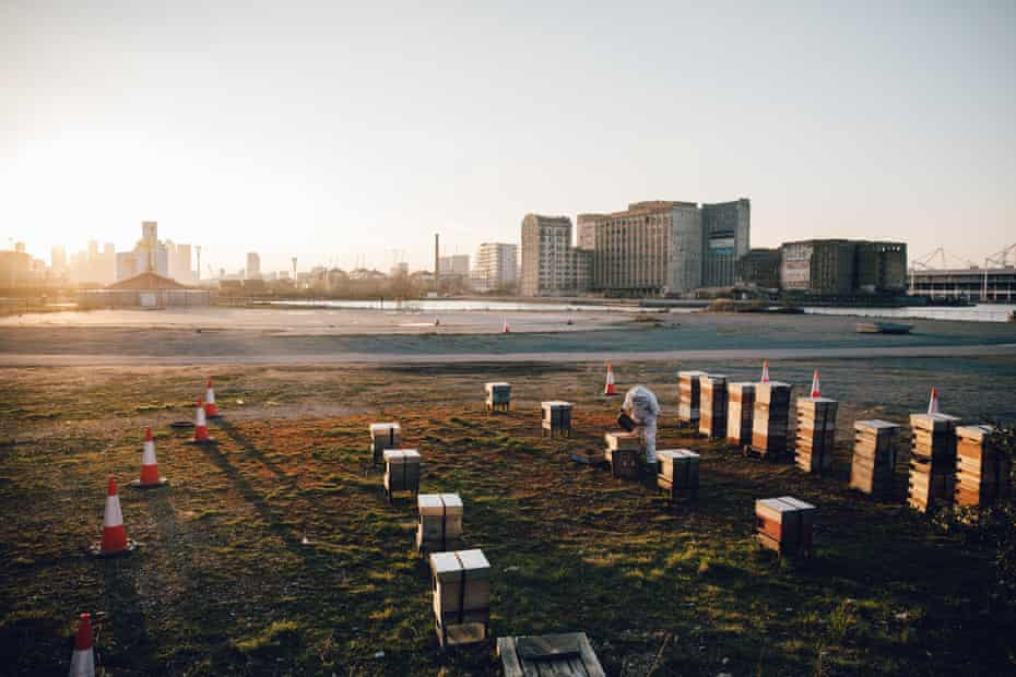 Dale Gibson of Bermondsey Street Bees surveys bees kept at a brownfield site in London Docklands.