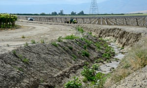A water canal used for irrigation running along a newly planted vineyard is nearly dry.