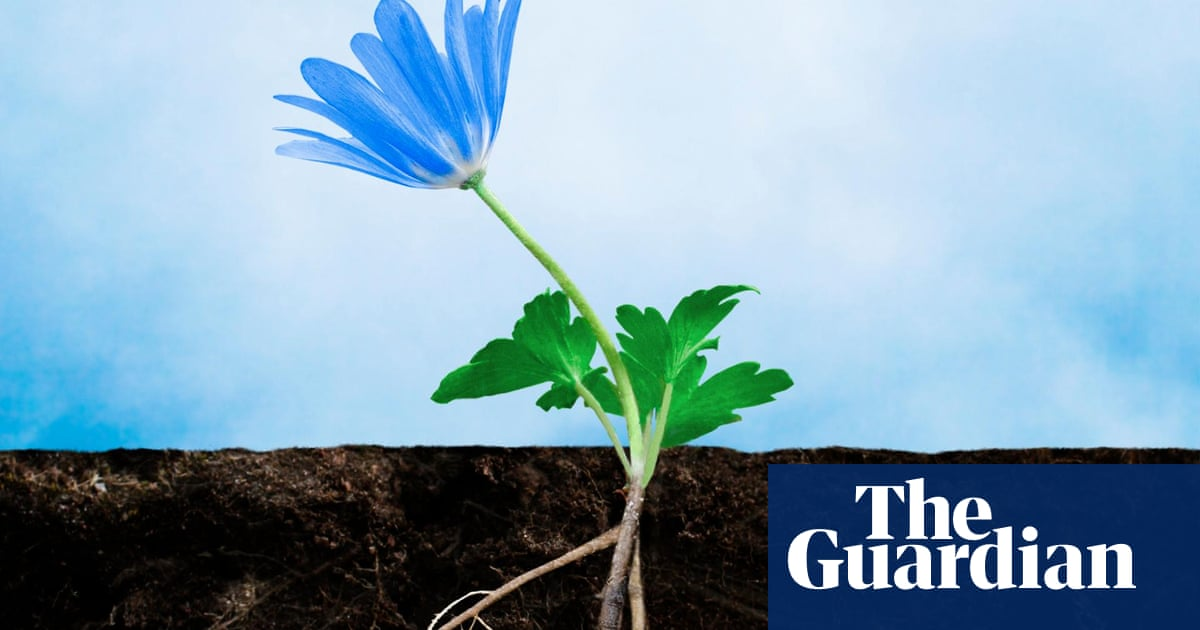How to move a plant in flower (if you must) | Alys Fowler | Life and