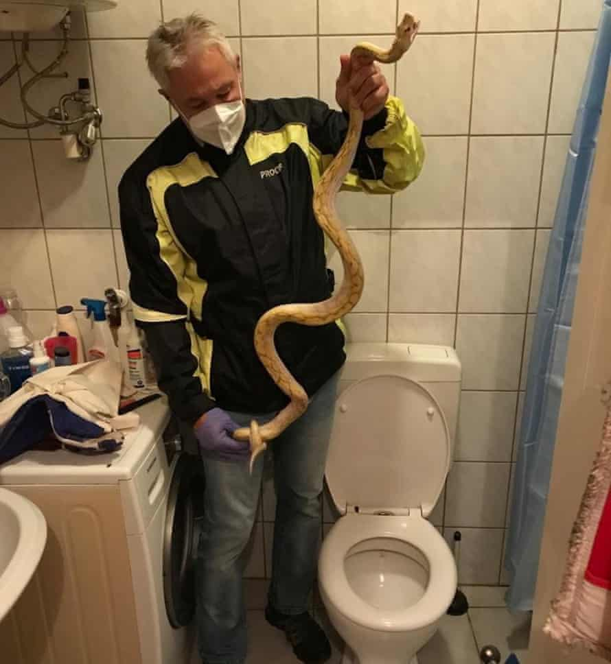 Reptile expert Werner Stangl holds a python that slipped down the drains and bit a person while sitting on the toilet, in Graz, Austria.
