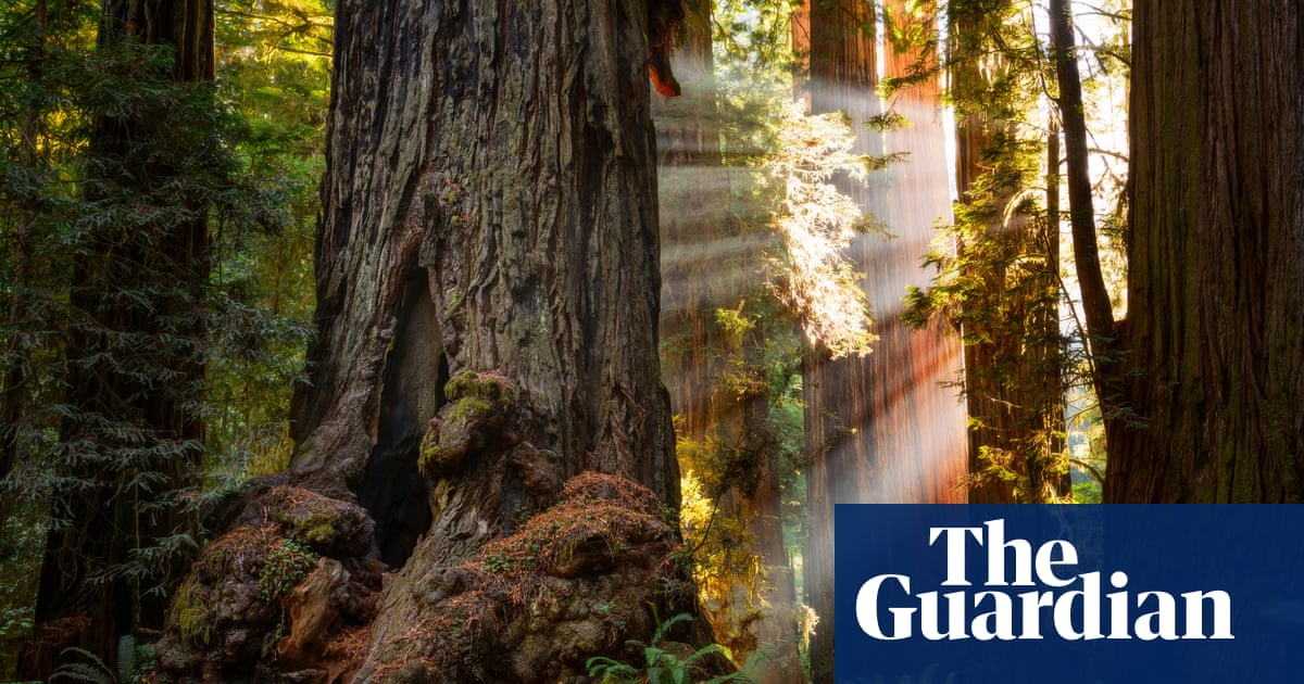 Finding the Mother Tree by Suzanne Simard review – a journey of passion and introspection