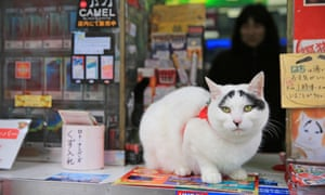 Japanese cat with lucky eyebrows