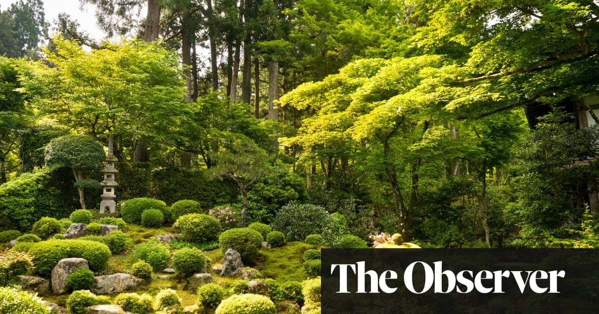 Timeless Moss Gardens Are Springing Back James Wong Life And
