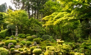 Lush moss garden with trees
