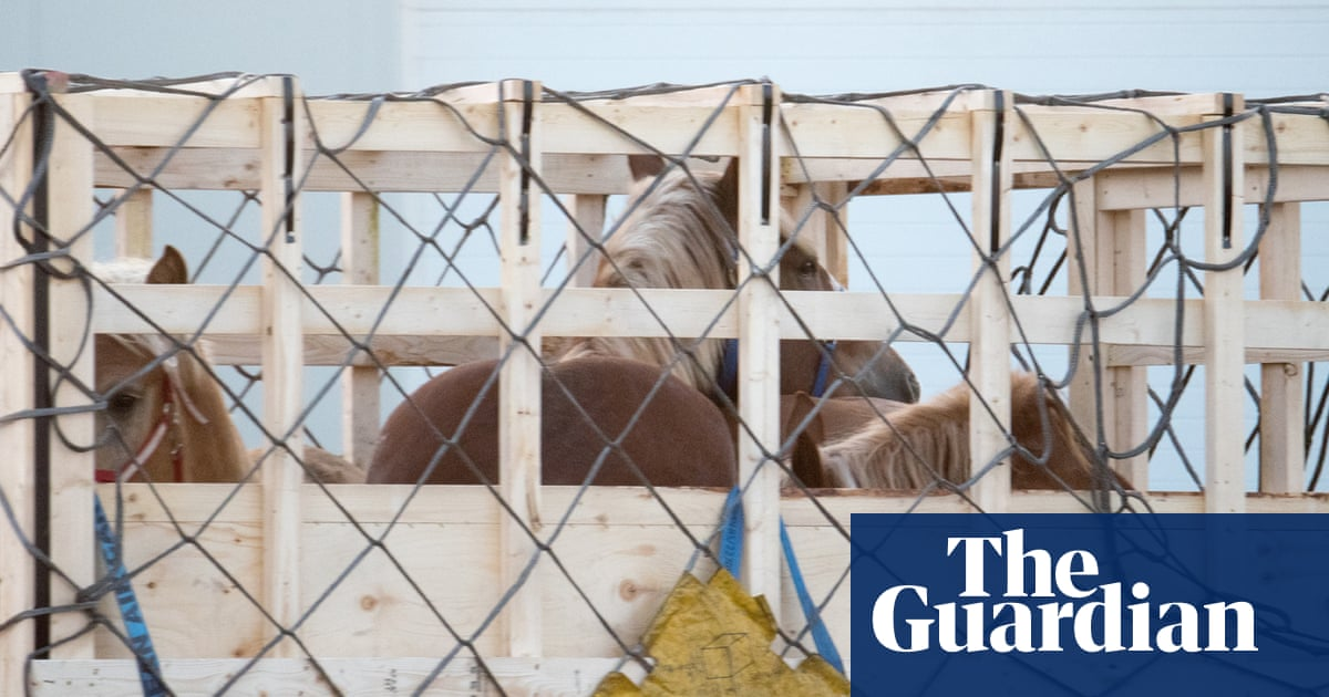 Protests at 'inhumane' export of live horses to Japan for food