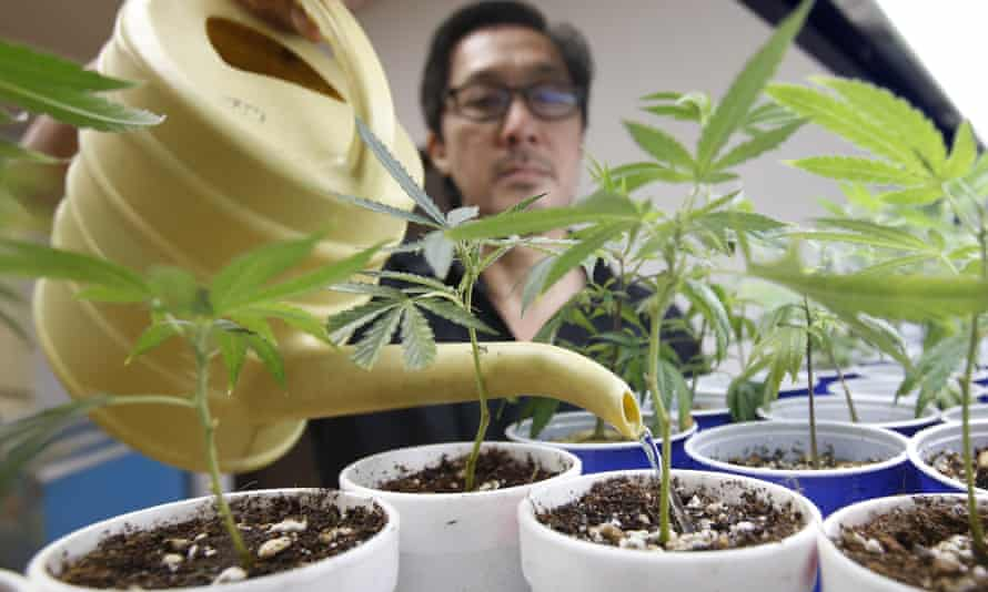 A medical marijuana facility in California.