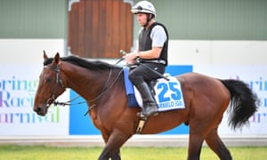 Marmelo pictured during a trackwork session ahead of his currently aborted bid for the Melbourne Cup.