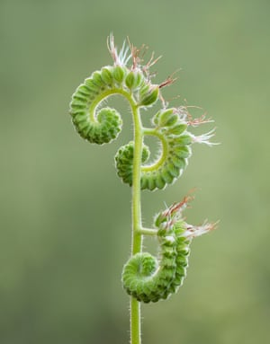 Unfurling by Ashley Moore, Kings Canyon National Park, California, United States