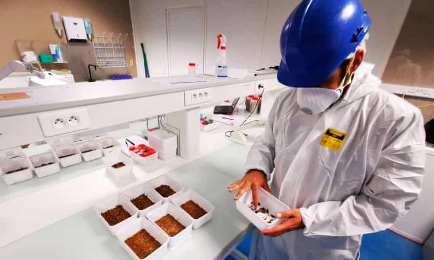 A man in a white coat and helmet in a lab inspecting a tray of insects