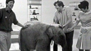 Watch your toes … Lulu the marauding elephant in 1969.