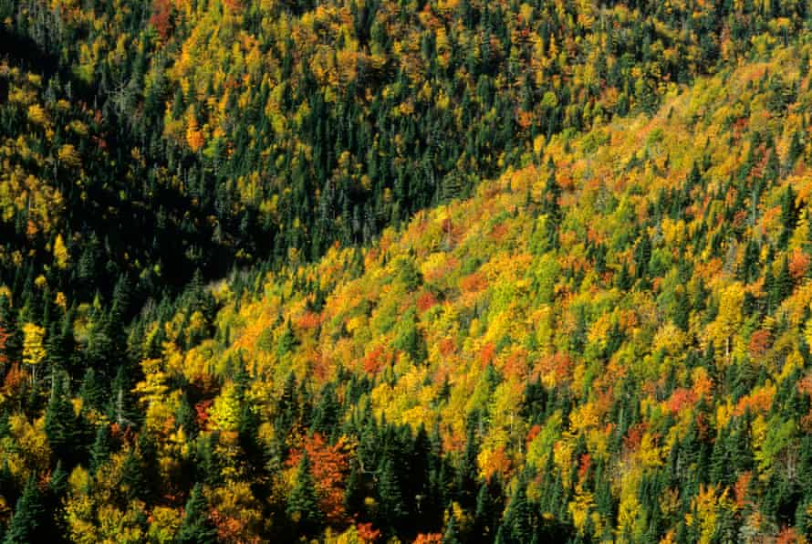 The import of wood from Canada's forests has increased.
