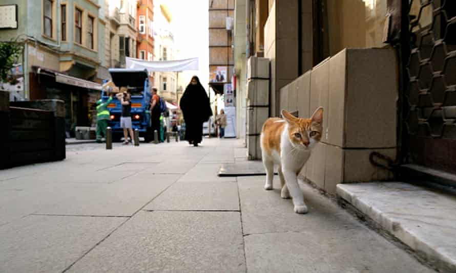 'Beguiling' Turkish cat documentary Kedi, exclusive to YouTube Premium.