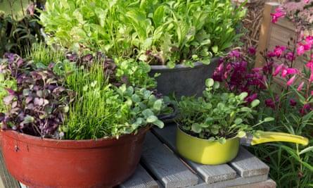 Salad crops.