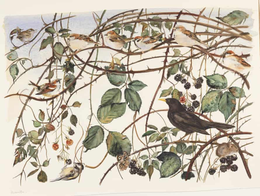 Illustration by Jackie Morris from The Lost Words by Robert Macfarlane
