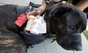 Bagheera carries Tarver's her medication in case of a seizure.