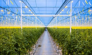 Carbon emissions from an on-site electricity plant will also be funnelled into the greenhouses for the plants to absorb.