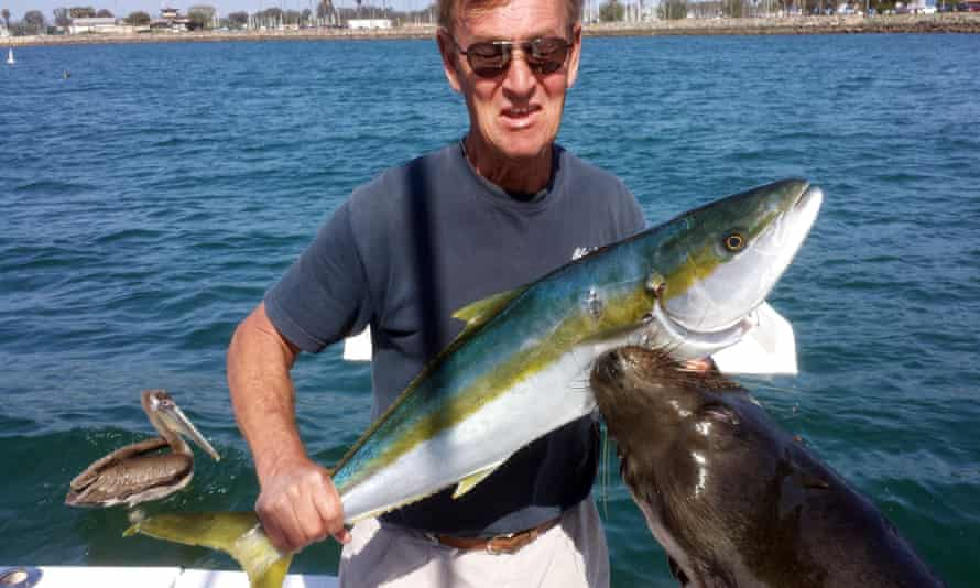 Dan Carlin holds a recently-caught yellowtail fish at the moment a sea lion leaped up to grab the fish - and him - at Mission Bay in San Diego.