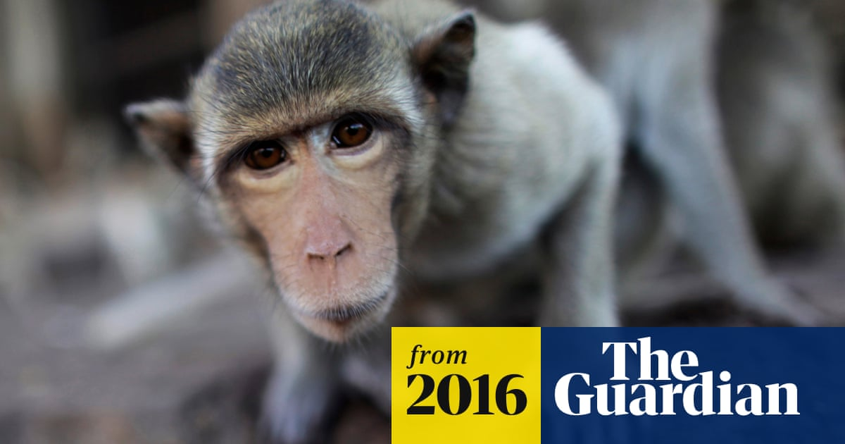 The stuff of nightmares': US primate research centers