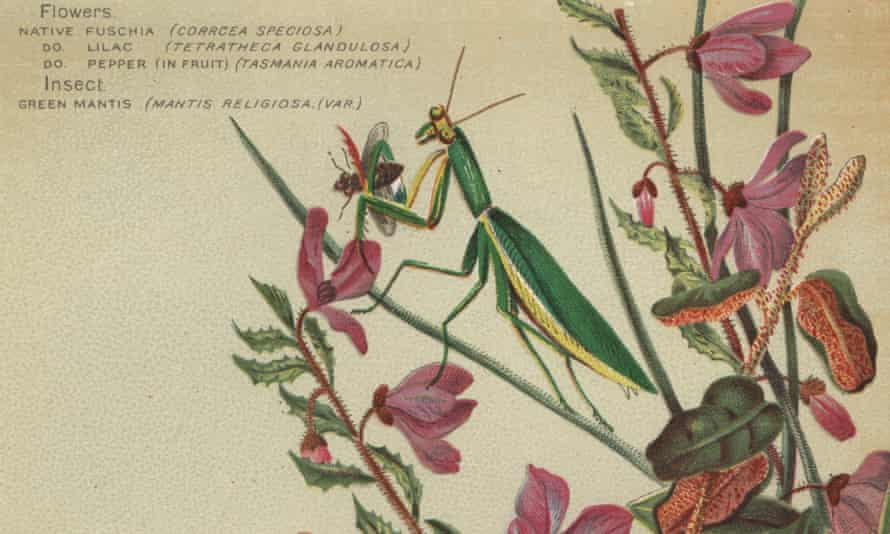 Each mantis looks so perfect and new, so whole and individual.