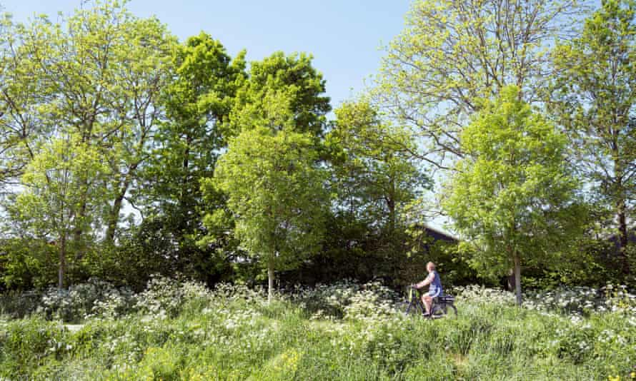 person on bicycle passes blooming flowers on country road between Utrecht and Houten in the Netherlands
