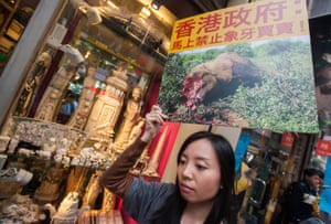 A woman holds a picture of a dead elephant with a Chinese slogan saying 'Hong Kong government: ban the ivory trade' during a protest against Hong Kong's legal ivory trade in the city's main ivory selling district of Hollywood Road and Queen's Road Central, Sheung Wan.