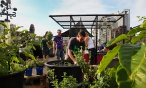 Volunteers and visitors work together in the communal rooftop garden at Wayside Chapel, Sydney