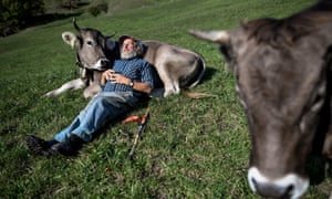 Swiss voters ready to take the cow by the horns | World news