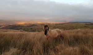 A wild horse among the grasses of the Cambrian Wildwood