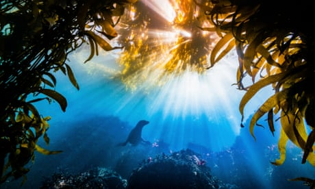 Nature Conservancy's global photo contest winners 2019