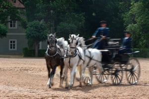 Since the late 18th century, the Kladruber horses have come in two colours, grey and black. The former were used for royal ceremonies and the latter for high-ranking clergy.