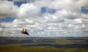 a rhino getting airlifted in South Africa.