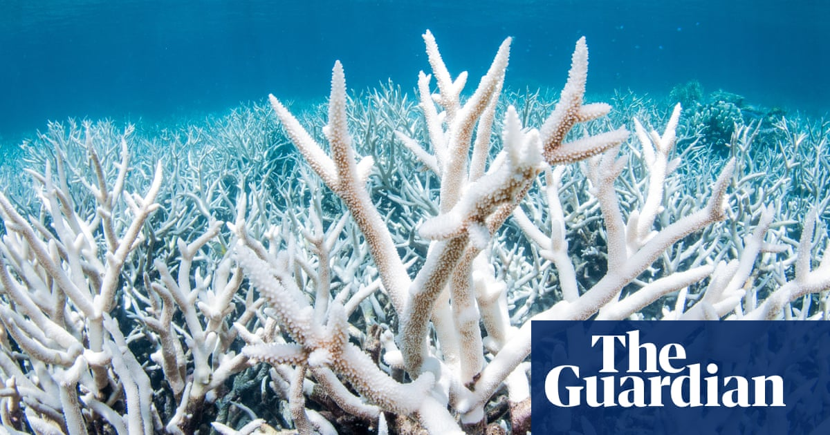 The lobbying push that killed off a fight to save the Great Barrier Reef