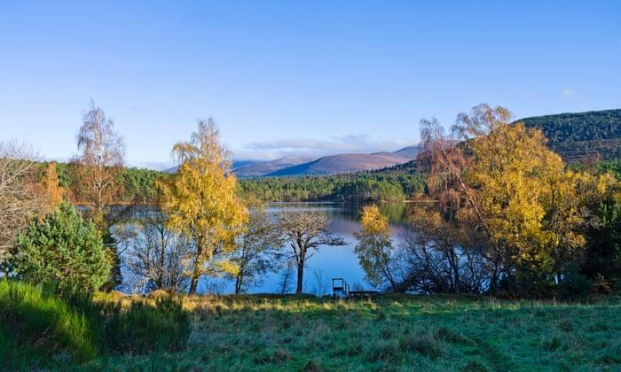 Bare highland dating