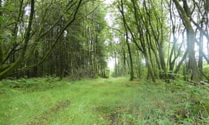 A path in the wood, near the Bulworthy Project cabin, in Devon, UK