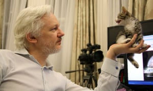 Julian Assange sits with a kitten, inside the Embassy of Ecuador in London.