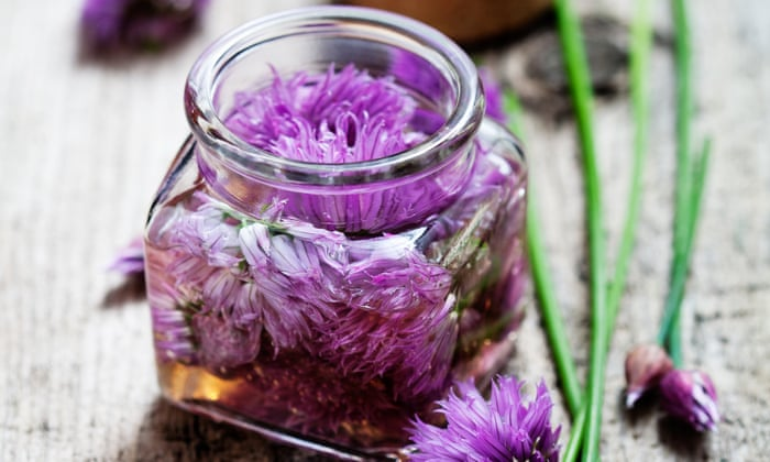 Strange And Delicious A Guide To Pickling Young Petals Alys