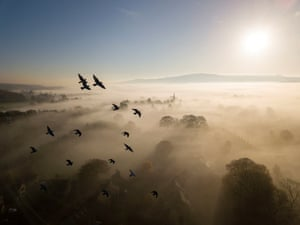 Habitat category winner: Brighter Skies on the Horizon (rock dove or feral pigeon) by Rich Bunce from Ilkley, West Yorkshire