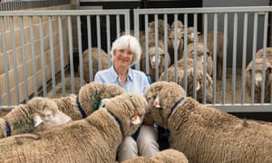 Professor Morton, with transgenic sheep imported from New Zealand to assist with research into Huntington's disease.